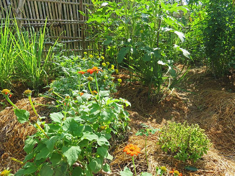 09 - un nouveau jardin