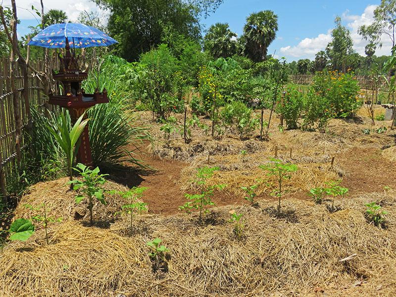 10 - un nouveau jardin