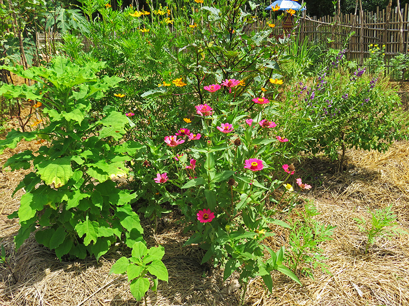 11 - un nouveau jardin